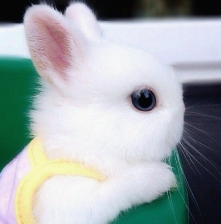短腿小萌兔图片